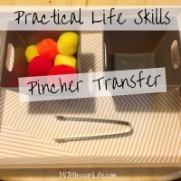 Practical Life Skills - Pincher Transfer