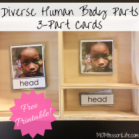 Diverse Human Body Parts 3-Part Cards -- Free Printable