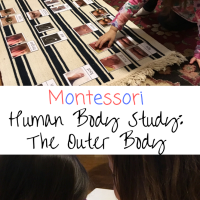 Montessori Human Body Study:  The Outer Body