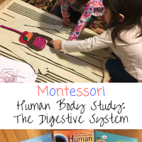 Montessori Human Body Study:  The Digestive System