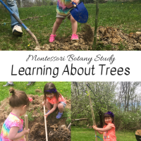 Montessori Botany Study:  Learning About Trees