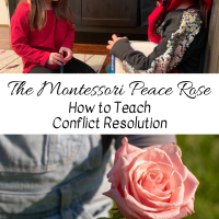 The Montessori Peace Rose -- How to Teach Conflict Resolution